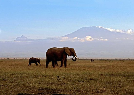 Kikuyu Lodge Hotel &amp; Safaris: Amboseli
