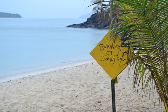 Sunset Beach Resort:                   Beware of jellyfish (sometimes)