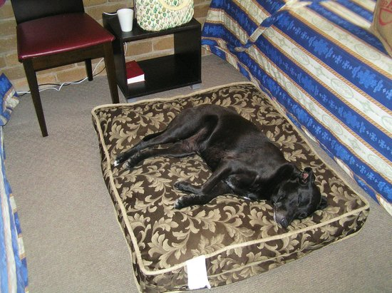 North Albury, Australia:                   Our contented boy, Rossco, highly recommends this motel!