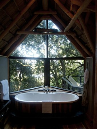 The Phantom Forest Eco-Reserve:                   View from our bathroom!!!
