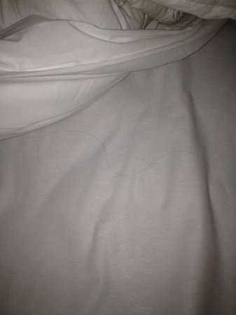 BLVD Hotel &amp; Suites:                   multiple long hairs on sheets