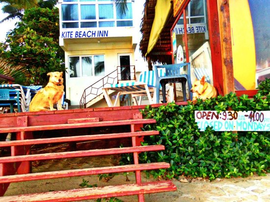 Kite Beach Inn:                   Dogs barely staying awake on duty.