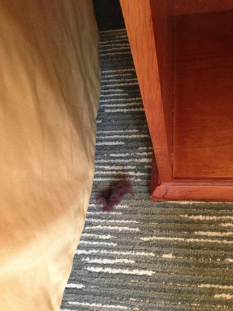 Holiday Inn Express Hotel & Suites Edmonton South:                   This hairball? thing? was there the whole time. Obviously no cleaning there!