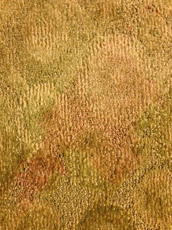 La Quinta Inn & Suites Bismarck:                   Stained WET Carpet
