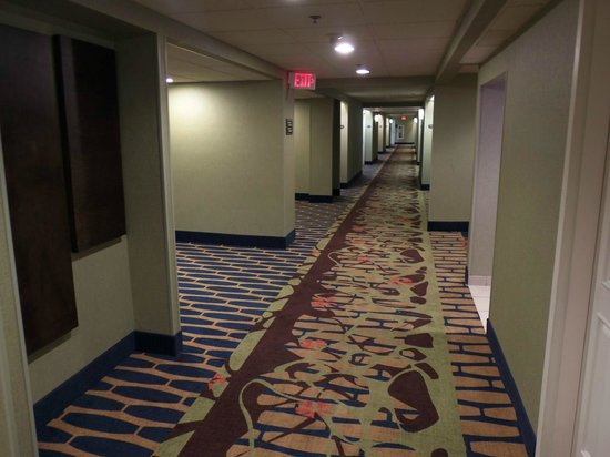 DoubleTree by Hilton Hotel Norwalk : typical hallway