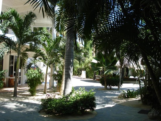 Club Cascadas de Baja:                   The tropical setting around the resort.