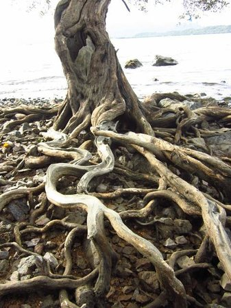 Discovery Island Resort and Dive Center:                   The mangrove walk