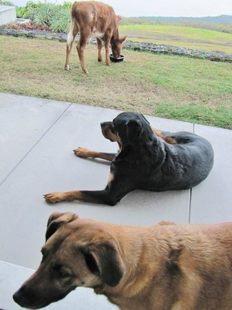 Horizon Guest House: Such a scene of domestic animal bliss!