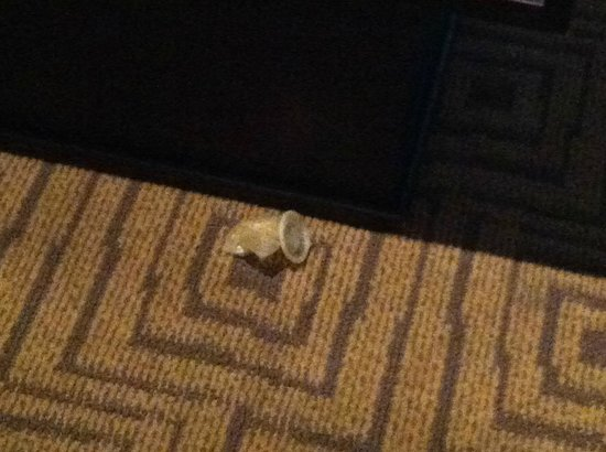 The Atheneum:                   Used condom on the floor!