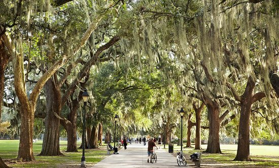 Savannah attractions
