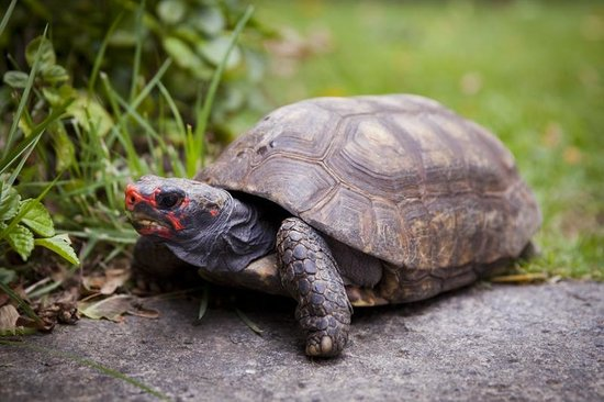 Casa Beleza: One of our tortoises