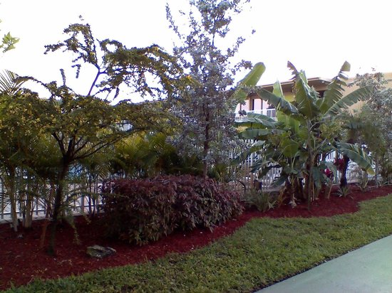 Rodeway Inn & Suites Fort Lauderdlale Airport/Cruise Port:                   back garden