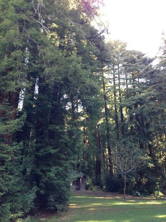 Glen Oaks Big Sur:                                     Trees and more trees