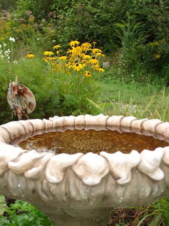 Lamoine, ME: Bird bath and black-eyed Susans