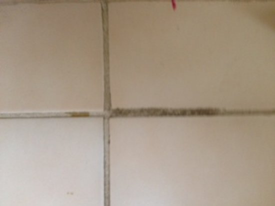 Quality Inn:                                     Filthy grout tile bathroom