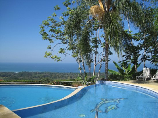 Whales & Dolphins Ecolodge:                   pool & view