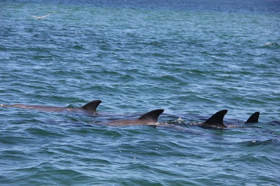 Bunbury, Australia: Dolphins from the boat