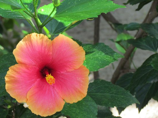 Ranguana Lodge:                   Blooming beautiful