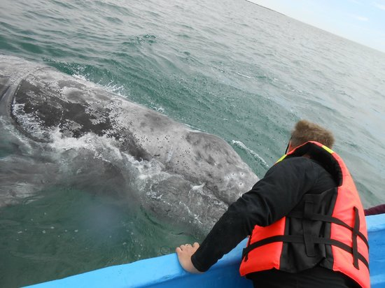 Baja California Sur, Meksiko:                   encounter with the whales