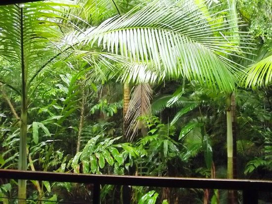 Cape Trib Exotic Fruit Farm: View from the verandah