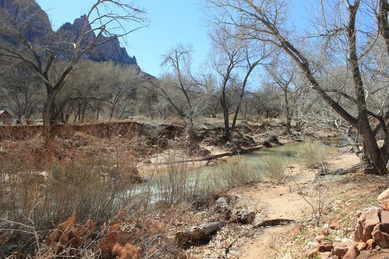 Cliffrose Lodge & Gardens: Beach and Virgin River just outside our room!