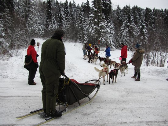 Tofte, MN: Sled team at Sawbill checkpoint, John Beargrease sled dog event