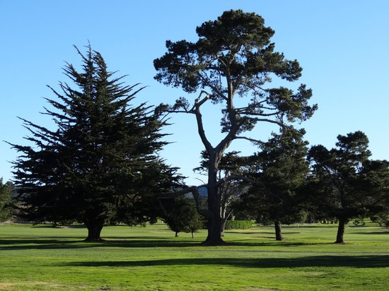 Hyatt Regency Monterey Hotel &amp; Spa: View of the golf course from the patio