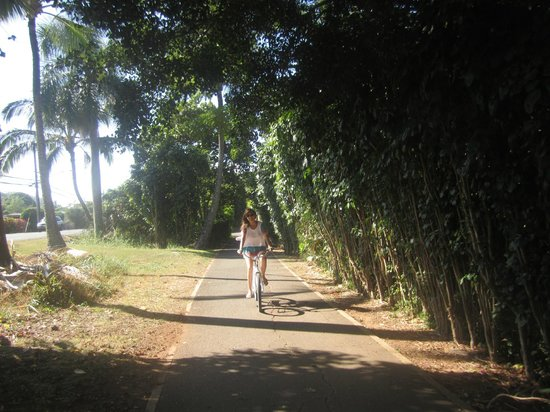 Bike Hawaii Tripadvisor Kalani Hawaii Private Lodging