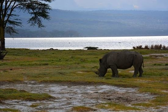 4 Days Lake Nakuru – Masai Mara