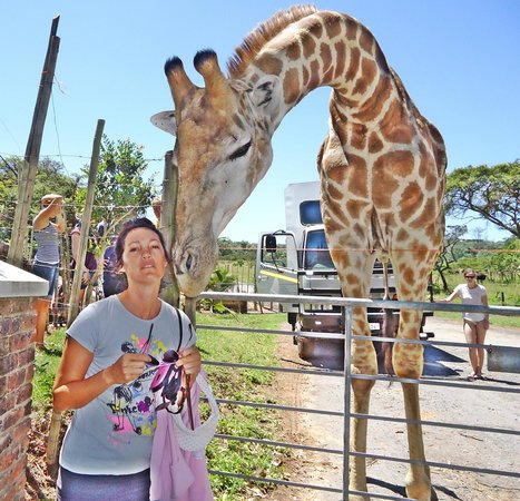 Areena Riverside Resort: Bonding with the crazy giraffe that thinks it is a dog