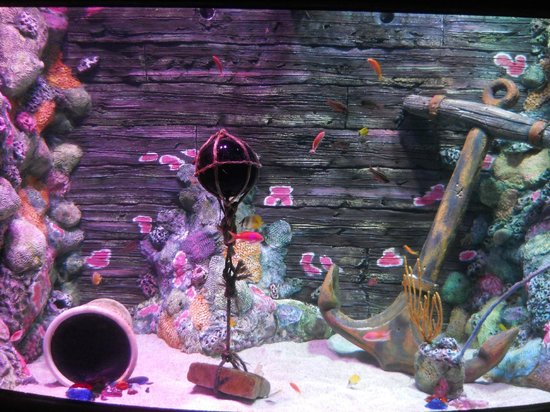 One Of The Fish Tanks In The Aquarium Picture Of Kansas