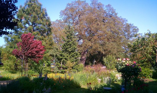 Lockeford, CA: Garden in the summer