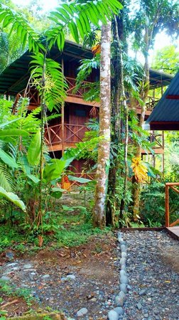 Rios Tropicales Lodge: our cabin