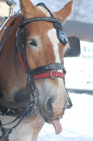 Jackson's Point, Canada: Couldn't resist - this was the horse that pulled us on our winter sleigh ride!