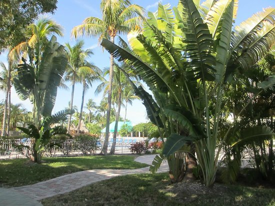 Holiday Inn Key Largo: Lovely Tropical Garden
