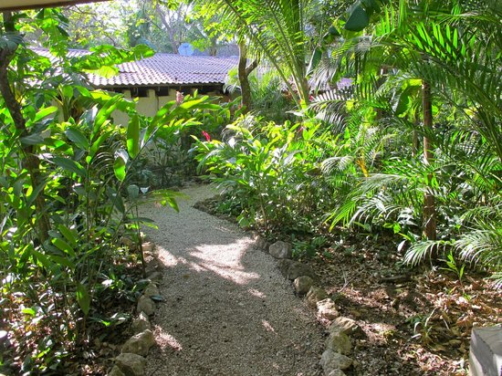Harbor Reef Surf Resort: Jungle path to our room