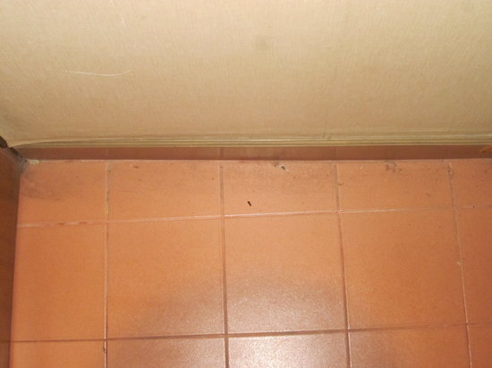 Silom Village Inn: Cockroaches and dirt on the floor