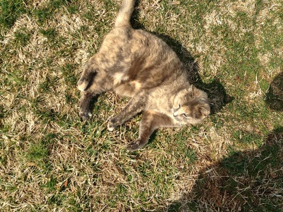 Sperryville, VA: Friendly Feline