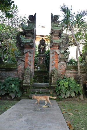 Puri Dalem Hotel: A cat and temple within the hotel grounds