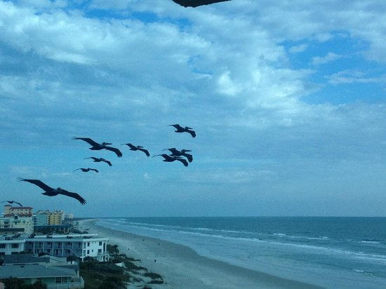 BEST WESTERN New Smyrna Beach Hotel & Suites: The Pelicans that regularly flew by our balcony were an added bonus