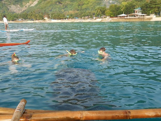 Malonzo Pension House: whale sharks