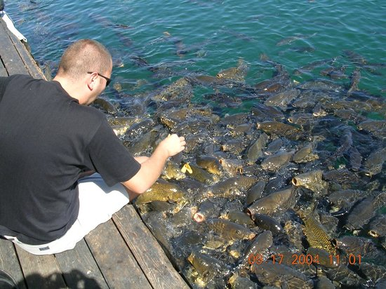 A lot of fish for Fishing lake mead