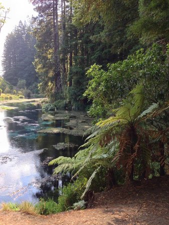 Hamurana, New Zealand: Start of the walk, just before the redwoods