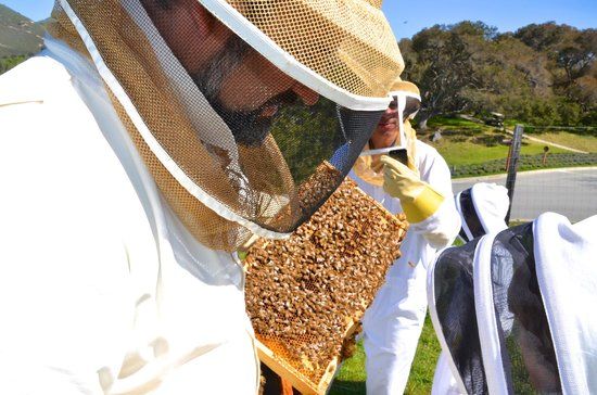 Carmel Valley Ranch: Bee experience