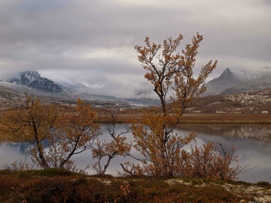 Wschodnia Dolina, Norwegia: Autumn colours in the Rondanes mountain range