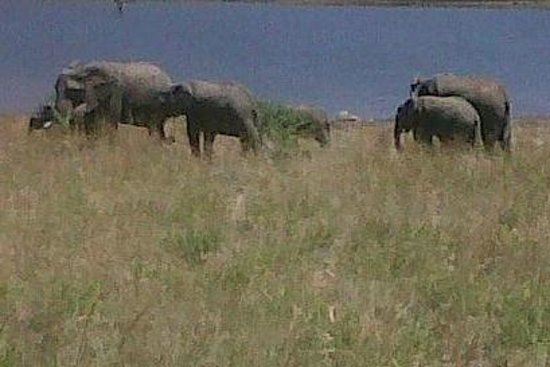 Bryanston, Republika Poudniowej Afryki: Elephants at the Dam