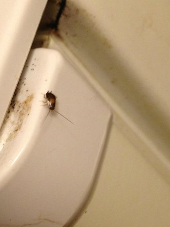 Howard Johnson Port Richey: A HUGE infestation of roaches,egg sacks all in the fridge,foul!