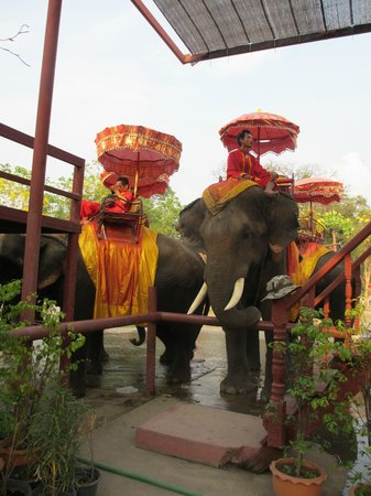 Ayuthaya Elephant Camp - Day Tours