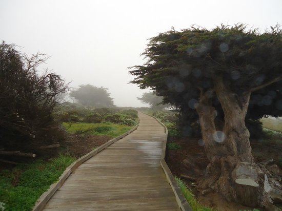 FogCatcher Inn: Beautiful foggy morning on the walkway along the coast.