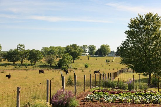 Boyce, VA: The backyard at L'Auberge Provencale